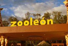 Photo of La policía recupera el cajero robado en el Zoo de León