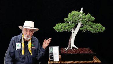 Photo of Mexicano crea un museo de bonsáis con más de 400 ejemplares